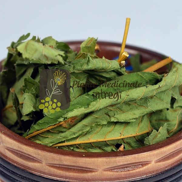 ceai de frunze de castan